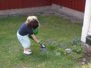 Charlie vattnar blommorna
