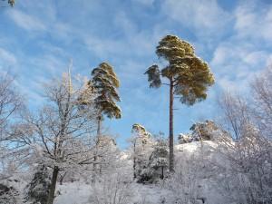 Härligt vinterväder