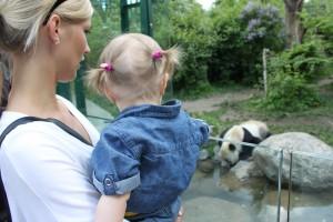 Tittar på pandor med faster
