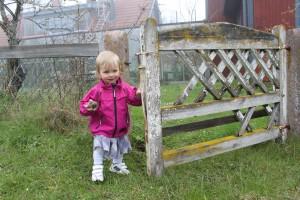 På väg ut i fårhagen